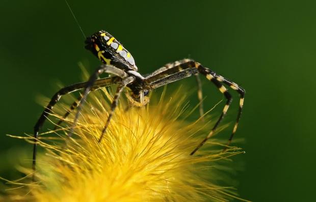 Потрясающие макроснимки насекомых